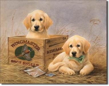 Plechová ceduľa Labrador šteniatka