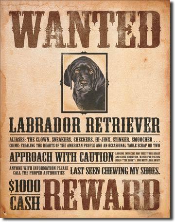 Plechová ceduľa Labrador na love SUPER AKCIA!!!!!