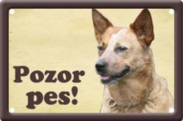 Ceduľka Australský honácký pes 1