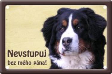Bernský salašnícky pes 2